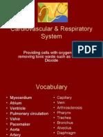 Cardiovascular & Respiratory System