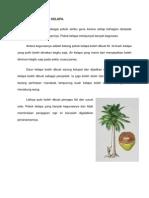 Kepentingan Pokok Kelapa