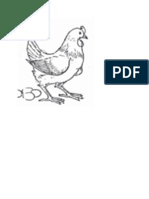 720+ Gambar Binatang Unggas Untuk Diwarnai HD Terbaru