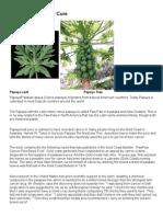 Papaya Leaf Cure