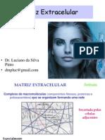 Matriz Extracelular111
