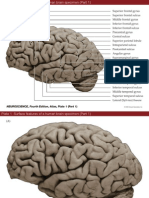 Atlas Figures of neuroscience