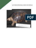 Técnicas de Conservación de Especímenes Animales (9)