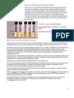 Aislamiento e identificación de microorganismos