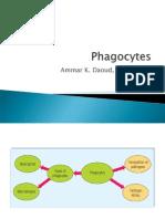 (19) Phagocytes