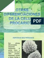 celulas procaritoas