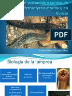 Explotación sostenible y cultivo de lamprea en Galicia