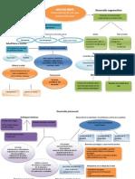 Mapa Conceptual_Adultez Media