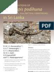 Endangered Cnemaspis podihuna (Sri Lanka)