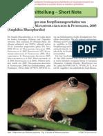 Breeding behavior of Philautus popularis (Sri Lanka)