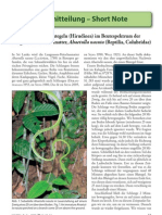 First record of Leeches in the prey spectrum of  Ahaetulla nasuta (Sri Lanka)