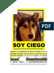 Afiche perro ciego viejo perdido
