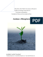 Auxinas e Rizogénese - Fisiologia Vegetal