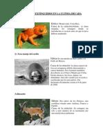 Animales Extinguidos en La Ultima Decada