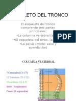 Esqueleto Del Tronco y columna Vertebral