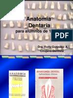 1° clase generalidades antomia dentaria-1