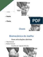 Cinesiologia Do Joelho