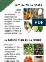 Agricultura En El Peru Agricultura Peru
