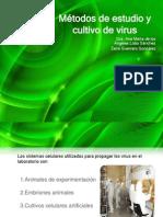 Métodos de estudio y cultivo de virus