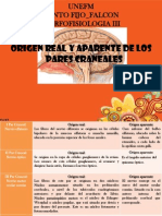 Origen Real Y Aparente de Los Pares Craneales! Presentacion.