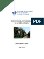 diseño agronomico de olivo