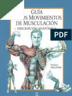 Anatomía Musculación