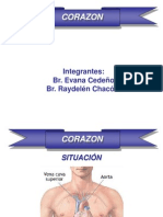 Medicina - Anatomia. Corazon