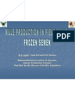 MULE PRODUCTION IN FIELD USING FROZEN SEMEN
