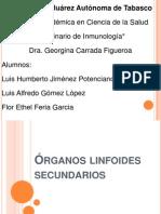 organoslinfoidessecundarios-101021034406-phpapp02