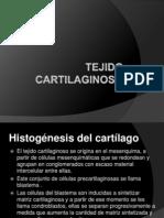 tejidocartilaginoso