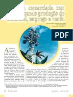 Mamona consorciada com feijão visando produção de biodiesel, emprego e renda