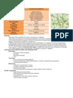 Corynebacterium Diphtheriae- Final Copy