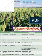 Disease of Sorghum