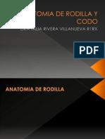 Anatomia de Rodilla y Codo
