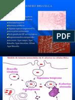Bacilos Gram No Entericos