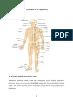 Sistem Muscoloskeletal