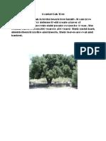 Coastal Oak Tree Scouts Report