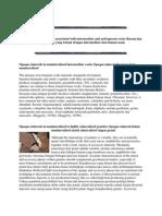 Opaque and Ore Minerals Associated With Intermediate and Acid Igneous Rocks Buram Dan Bijih Mineral Yang Terkait Dengan Intermediate Dan Batuan Asam