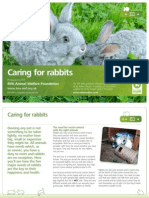 Rabbit Care Leaflet