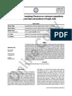 Satnam Et Al_2012_Molecular Typing of Mealybug Phenacoccus Solenopsis Populations