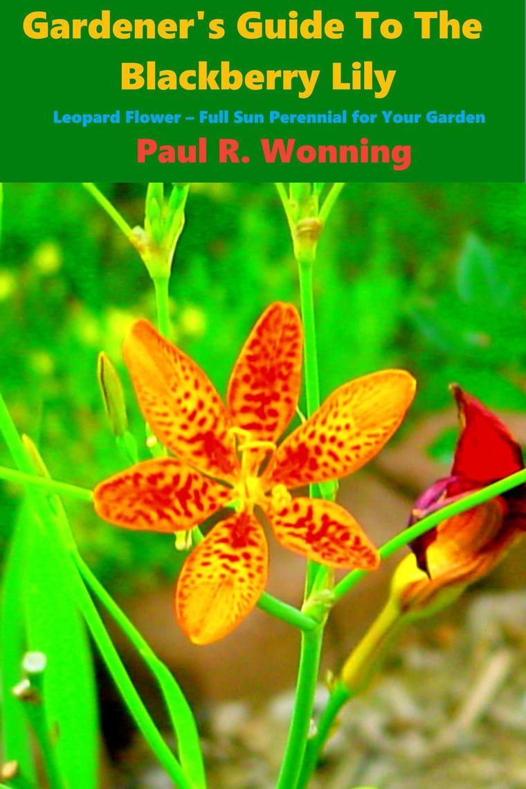 Abe S Guide To The Full Sun Perennial Flower Garden By Paul R