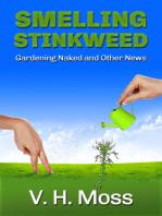 Smelling Stinkweed