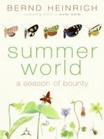Summer World
