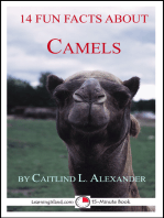 14 Fun Facts About Camels