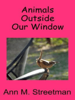 Animals Outside Our Window