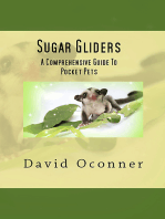 Sugar Gliders