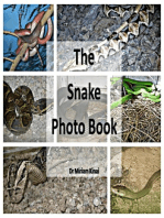 The Snake Photo Book