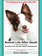 Animal Life after Death & Animal Reincarnation- Everything You Always wanted to Know! After-Death Do Animals Go to Heaven?