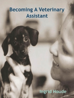 Becoming A Veterinary Assistant