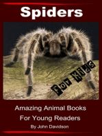 Spiders for Kids